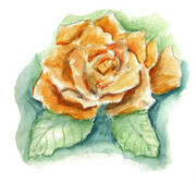 Orange Rose - watercolor penci